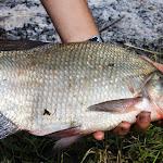 20140612_Fishing_BasivKut_024.jpg
