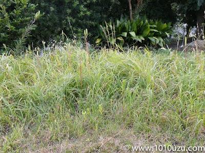 草ぼうぼうの庭