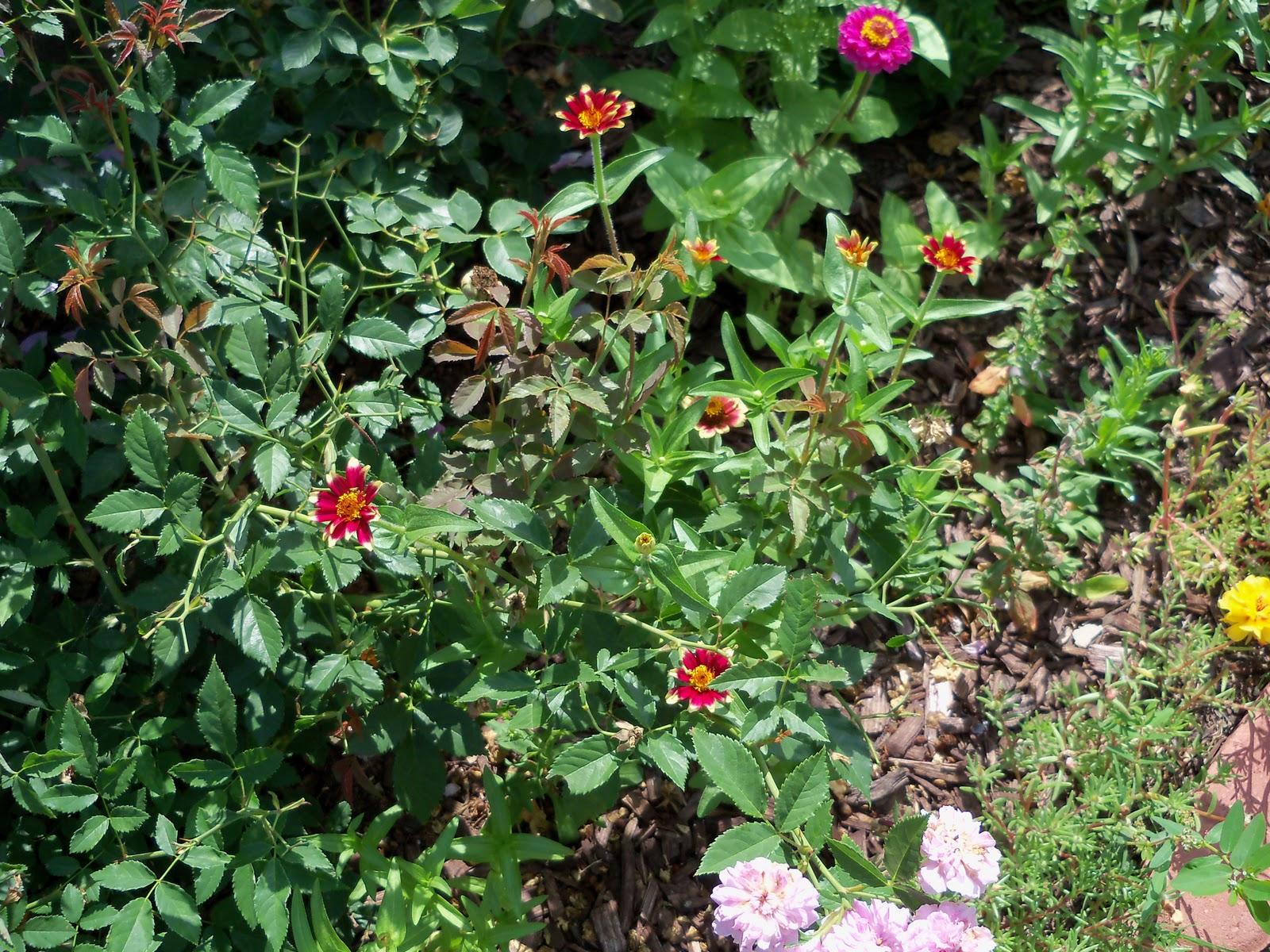Gardening 2010, Part Two - 101_2639.JPG