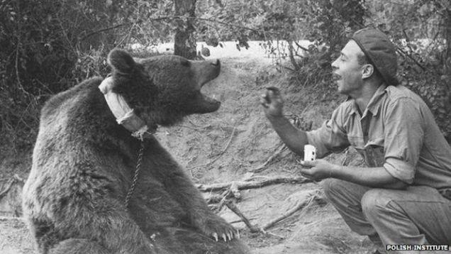 wojtek-soldier-bear-7