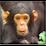 neil dayal's profile photo