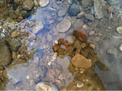 hiking, friends, turkey run, nature, tadpole