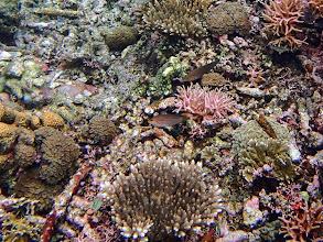 Photo: Unidentified Wrasse, Small Lagoon, Miniloc Island, Palawan, Philippines