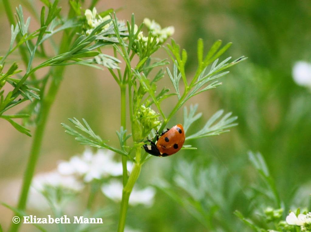 [ladybug%5B4%5D]