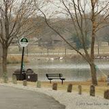 01-26-13 White Rock Lake - IMGP4338.JPG