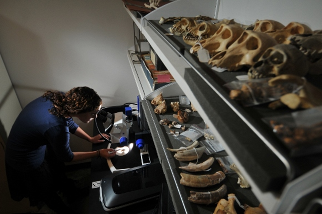 A CU Denver student works in an anthropology lab on campus. Photo: CU Denver