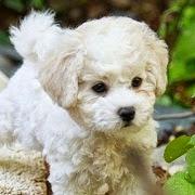 к чему снится белая собака