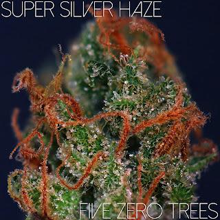 Super Silver Haze Macro 2