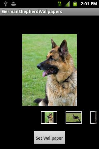 German Shepherd Wallpapers