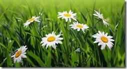 margaritas flores (9)