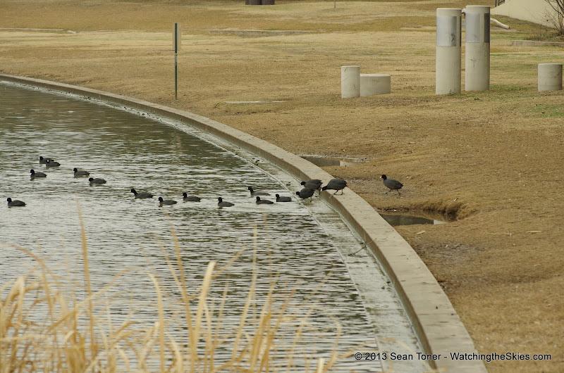 01-26-13 White Rock Lake - IMGP4359.JPG