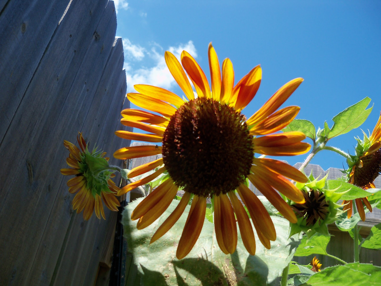 Gardening 2010, Part Three - 101_4504.JPG