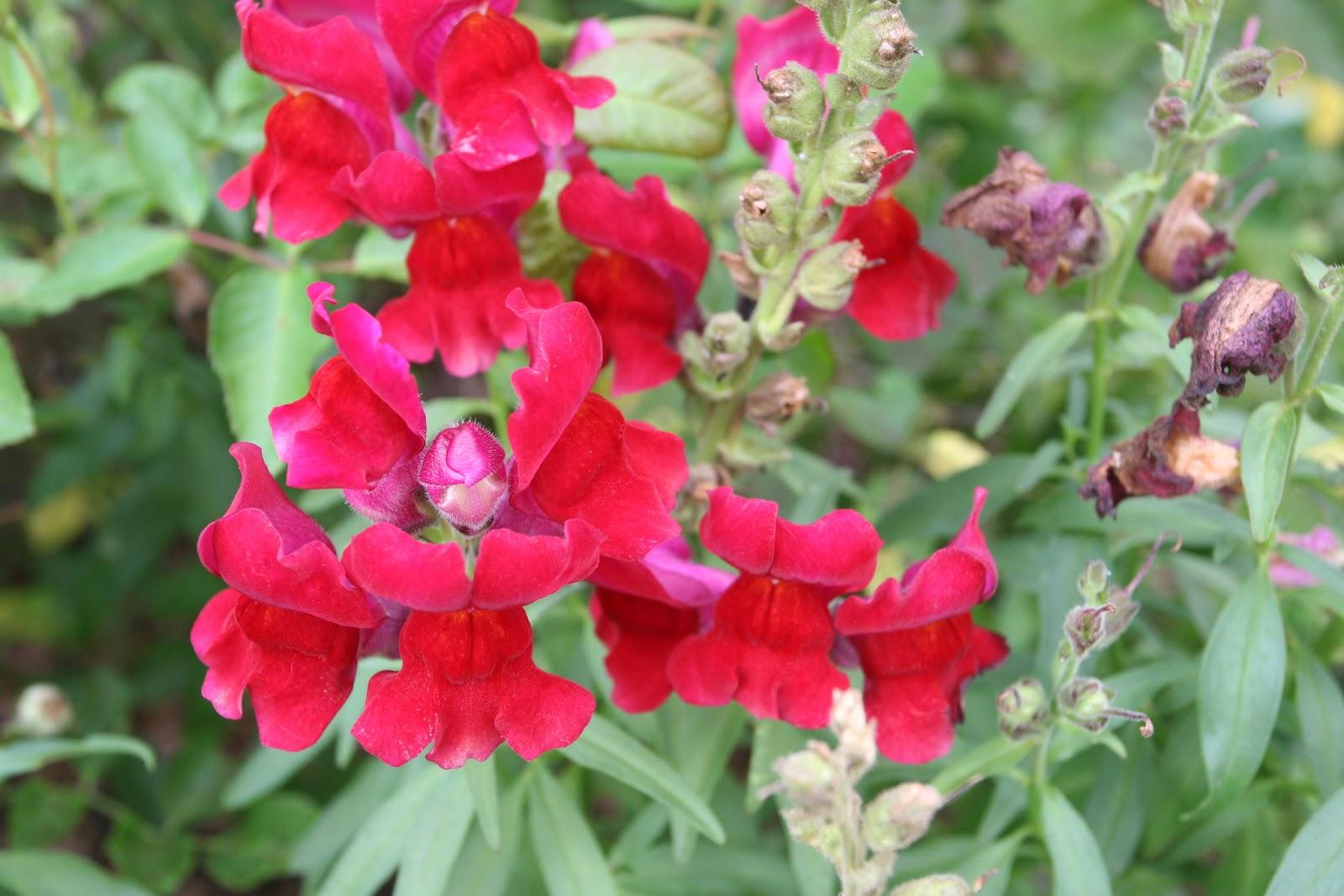 Gardening 2012 - IMG_3282.JPG