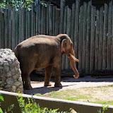 Houston Zoo - 116_8415.JPG