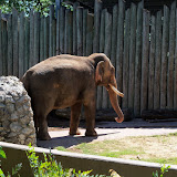 Houston Zoo - 116_8415.JPG