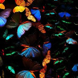 user Maa Christy Mensah apkdeer profile image