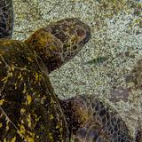 galapagos - Galapagos_FB_2-132.jpg