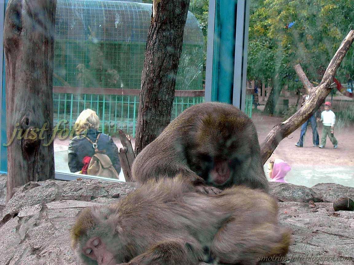 В зоопарке в Санкт-Петербурге - обезьянник фото