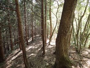 植林となり作業道が現れる
