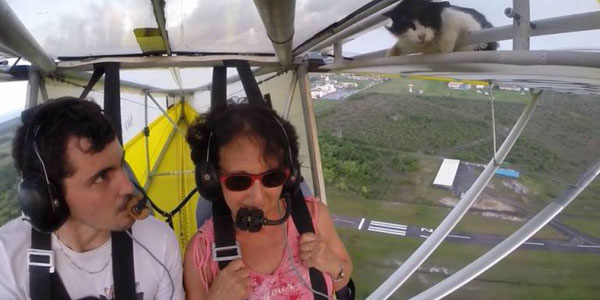 Image of Video: Every Pilot Should Know. Remove Cat Before Flight!