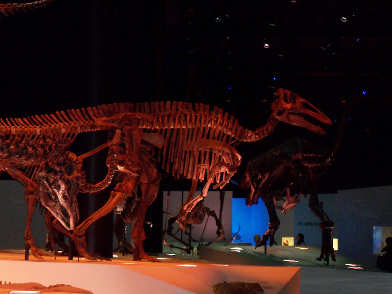 Houston Museum of Natural Science - 116_2669.JPG