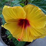 Gardening 2010 - 101_1011.JPG