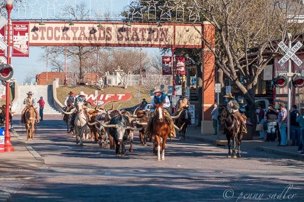 Ft Worth Stockyards Daily Parade