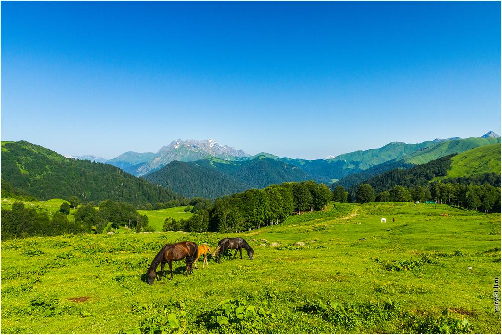 альпийские луга в абхазии фото