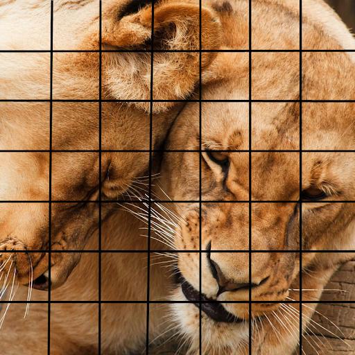 Image Pro Puzzle