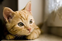 gato pensando gatinho pensativo gatos meditando