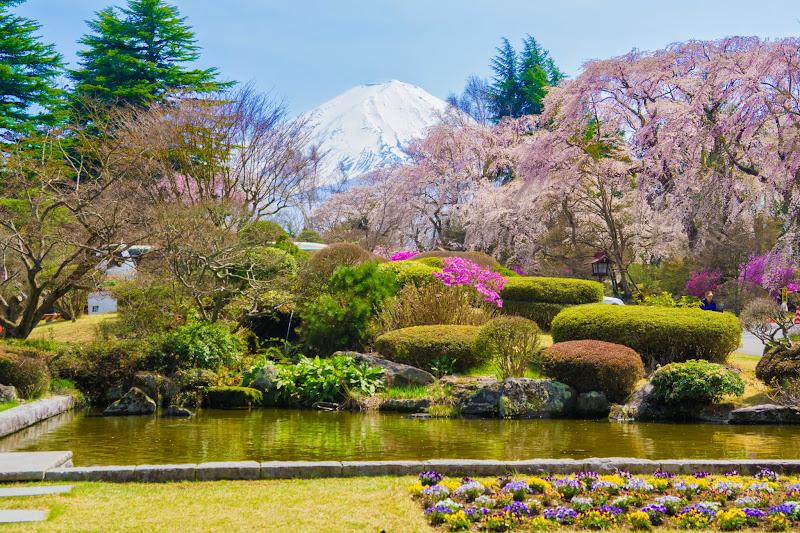 富士ビューホテル 桜 写真18