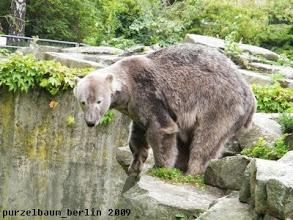 Photo: Knut wirft einen pruefenden Blick in den Wassergraben...
