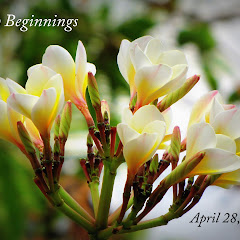 New Beginnings - April 2012
