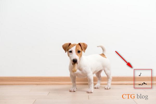 Cách trị ve rận chó mèo vào trong nhà, ve trên tường