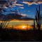 20150316  Desert Sonoran Museum881.jpg