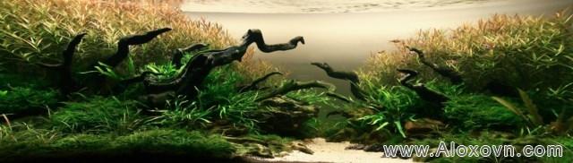phông nền hồ cá rồng, phong nen ho ca canh 03