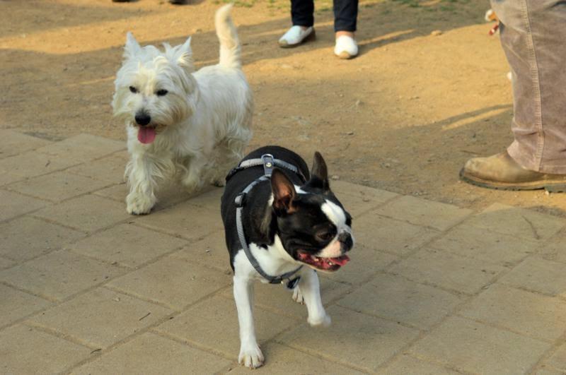 Kleinhundegruppe Mittwoch 17.30 Uhr - DSC_0033.JPG