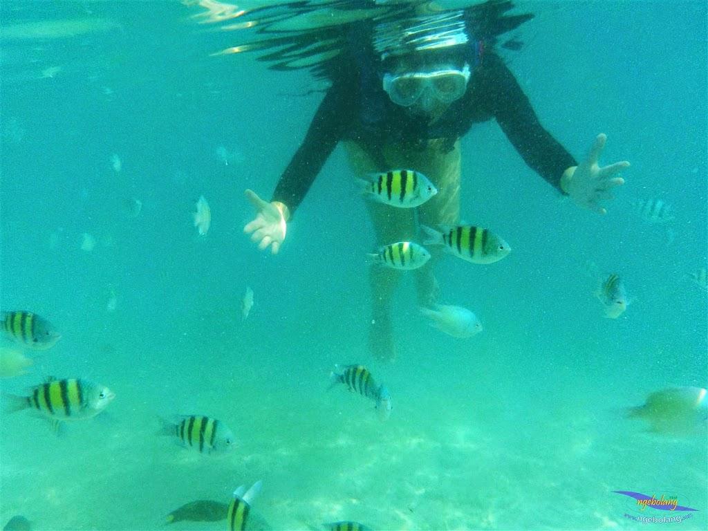 pulau harapan, 23-24 mei 2015 olympus 13