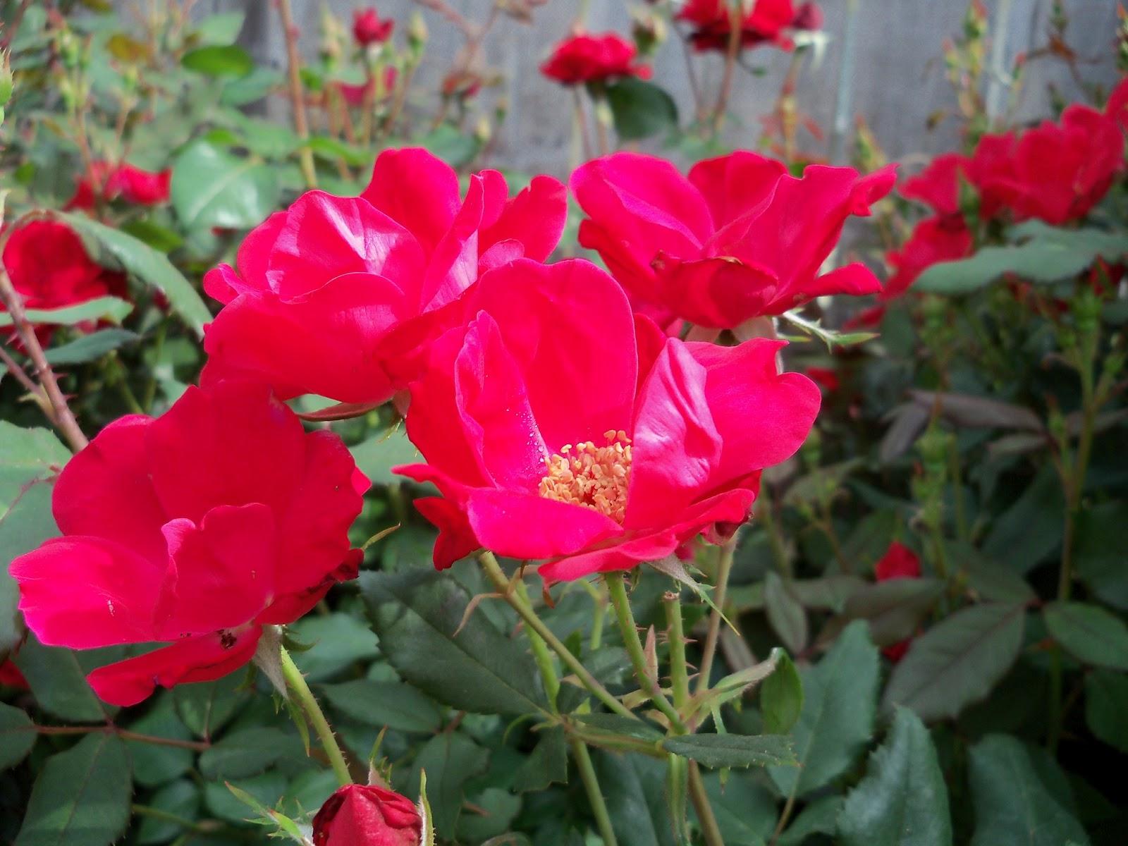 Gardening 2011 - 100_7630.JPG