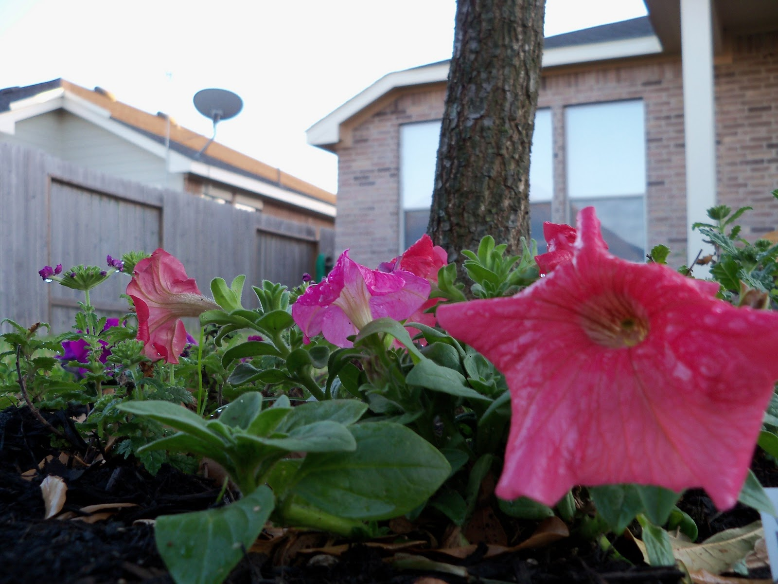 Gardening 2011 - 100_6735.JPG