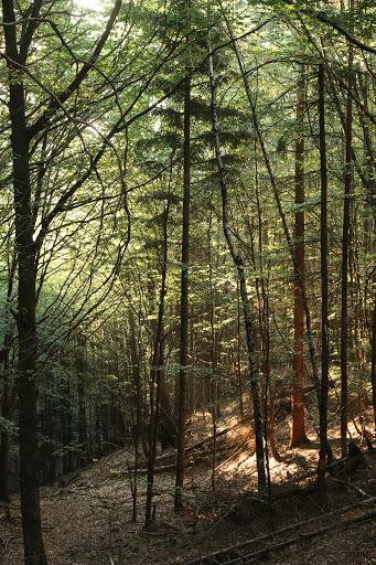 V lese po svitaní