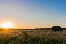Sunset with a rhino