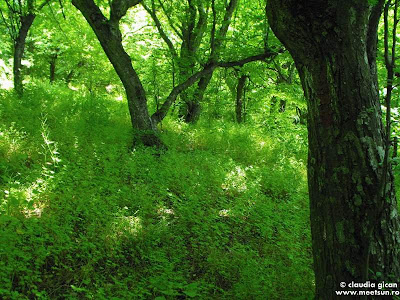 padurea verde in luna mai