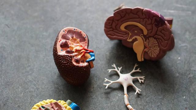 Dangerous Side Effects Of Keto Diet