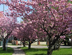 S. Plymouth in spring