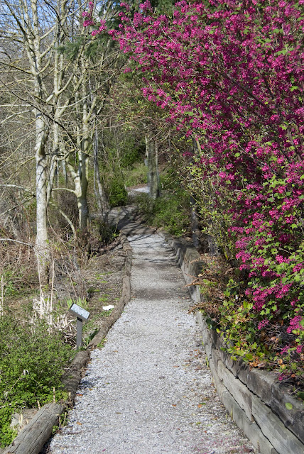 Whatcom Creek Trail in spring / Credit: Bellingham Whatcom County Tourism