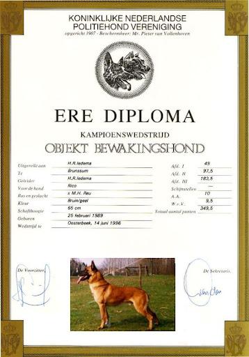 Ere Diploma Rico 4