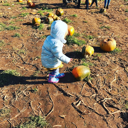 Pumpkin picking, farrington farm pumpkin festival, autumn, family days out wiltshire, kids day out, quick midweek meals, quick halloween meal ideas