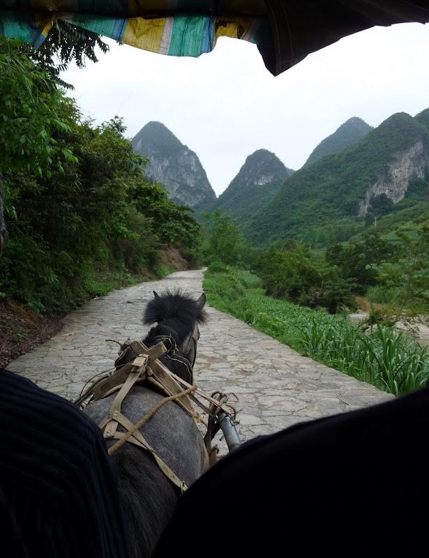 Chine.Yunnan Wen shan et BA MEI 1 - P1260876.JPG