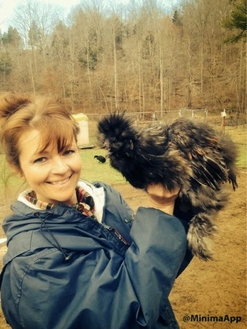 silkie chickens are a great homestead chicken!